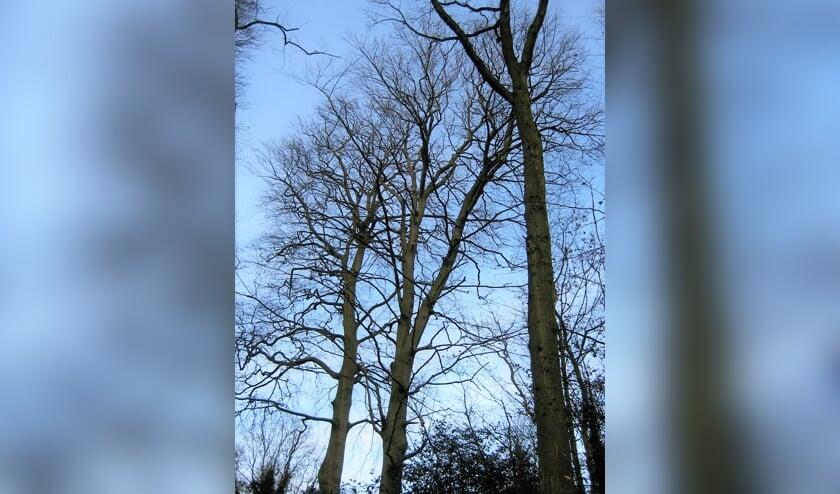 <p>De gezusters Beuk in januari 2012. | Foto Margreet Wesseling</p>