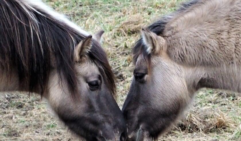 <p>De situatie rond de paardenlandjes lijkt rooskleuriger dan zich eerst liet aanzien.   Foto: Hedwig Elisabeth</p>