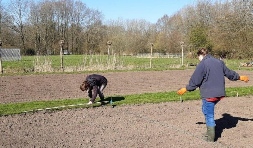 Vrijwilligers trappen paadjes voor een paar tuintjes op het schooltuinencomplex. | Foto: PR
