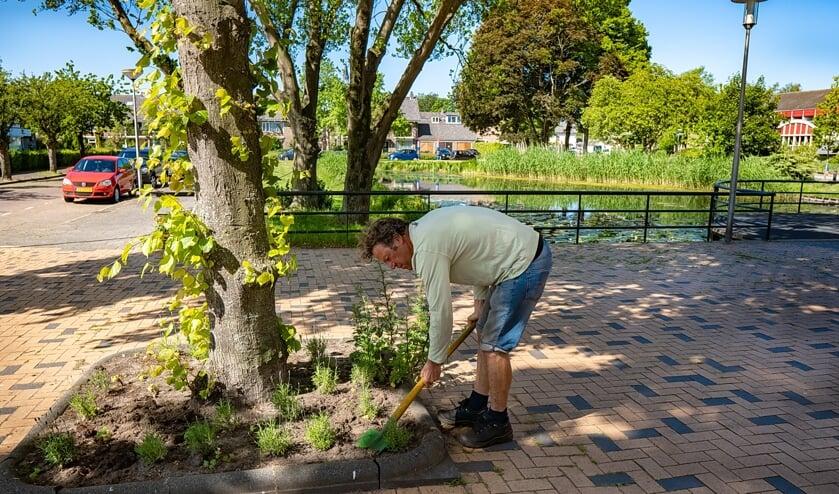 Clemens van Winden graaft plantjes in bij een boomspiegel op het plein voor 't Buurthuis.