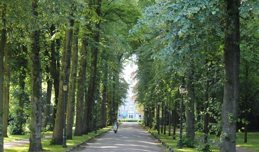 <p>De Bisschopslaan met de hoge bomen aan weerszijde is een van bekendste straten in Warmond.</p>