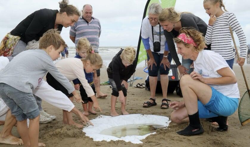 Onder leiding van een IVN-gids maak je tijdens een excursie kennis met alles dat het strand te bieden heeft.
