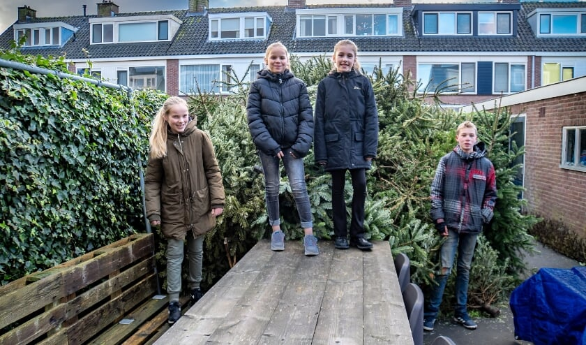 <p>V.l.n.r. Femke, Tessa, Fleur en Jelle met achter hen de berg kerstbomen die ze hebben ingezameld. | Foto: J.P. Kranenburg</p>