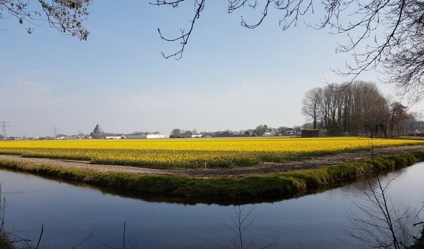 De Krogt bij Sassenheim waar het bedrijfsleven een industrieterrein in gedachten heeft.