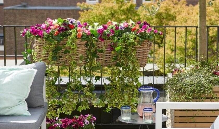 <p>Kleurrijk in de tuin, maar ook op het balkon.</p><p><br></p>
