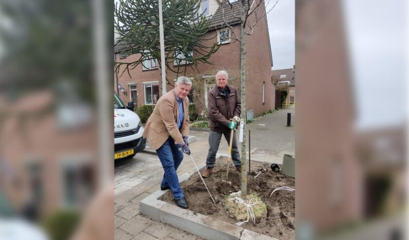 Wethouder Kees van der Zwet en bewoner de heer van Dijk planten een boom in de Voerman.