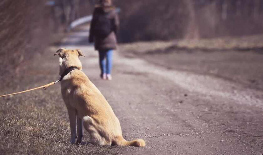 <p>Een schrikbeeld: een hond die gedumpt wordt. | Foto: Alexandra via Pixabay</p>