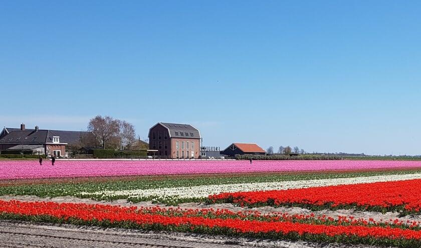 <p>De velden aan de Wasbeeklaan.&nbsp;</p>