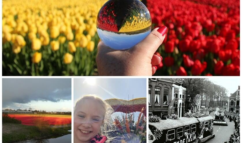 <p>Collage van de winnende foto&#39;s met bovenin die van Gieny Westra.</p>